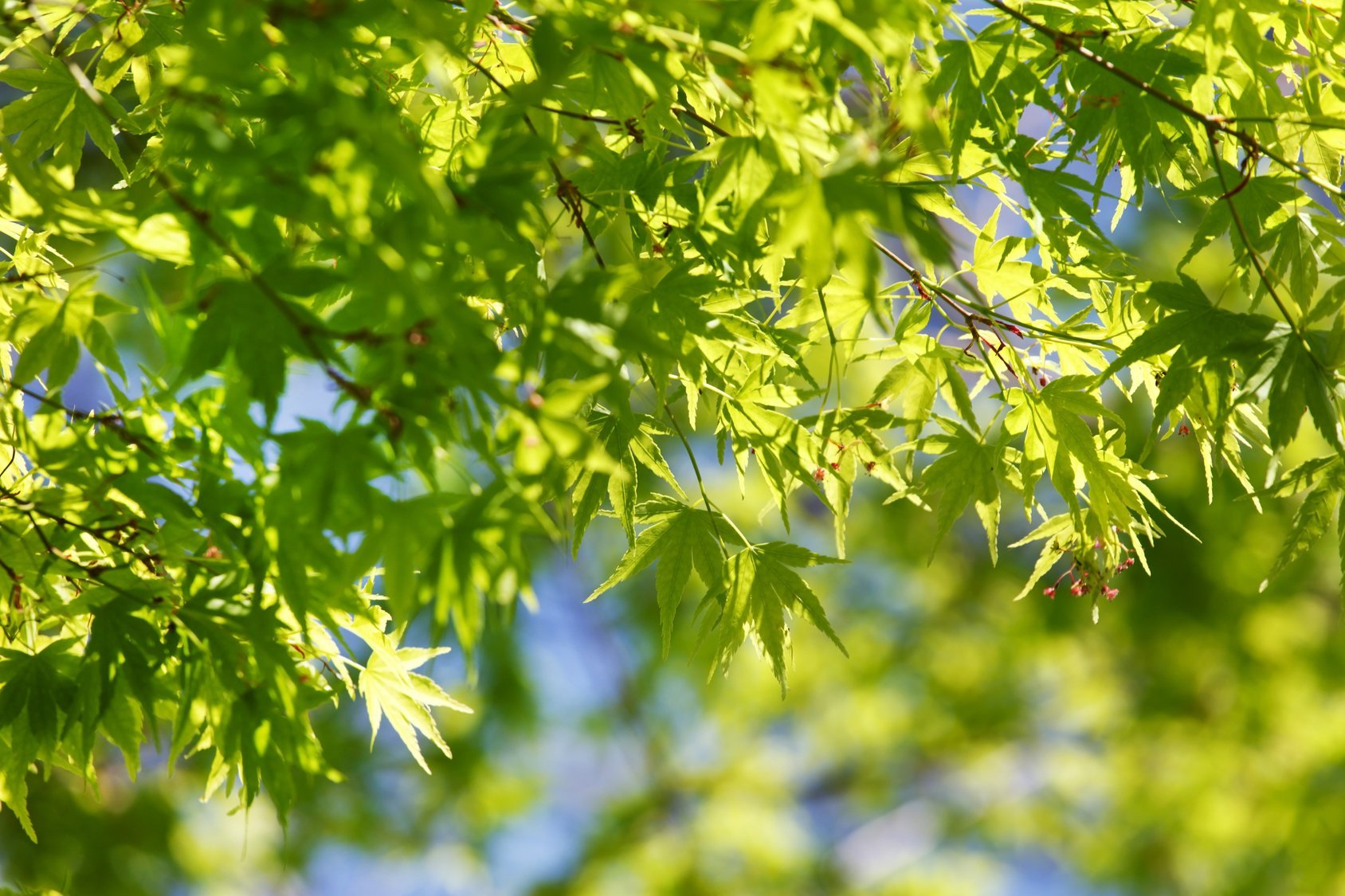 East of England Co-op Funeral Services' guide to Planning A Green Funeral