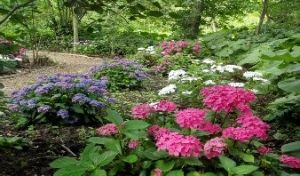 woodland garden path pink and purple flowers