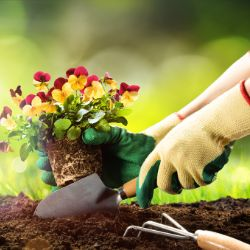 Elderly person gardening home Kent