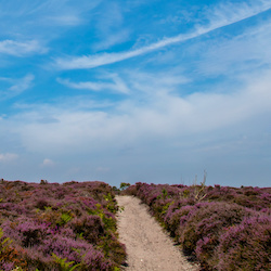 Dunwich Heath - Cultural Delights in Suffolk