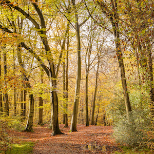 Buckinghamshire Woods - Benefits and Drawbacks of Life in Buckinghamshire