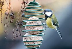 bird feeding during lockdown